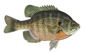 News posts hawkeye fly fishing association for Fly fishing iowa